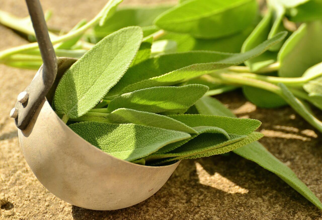 Integrate Spirituality with Plant Medicine
