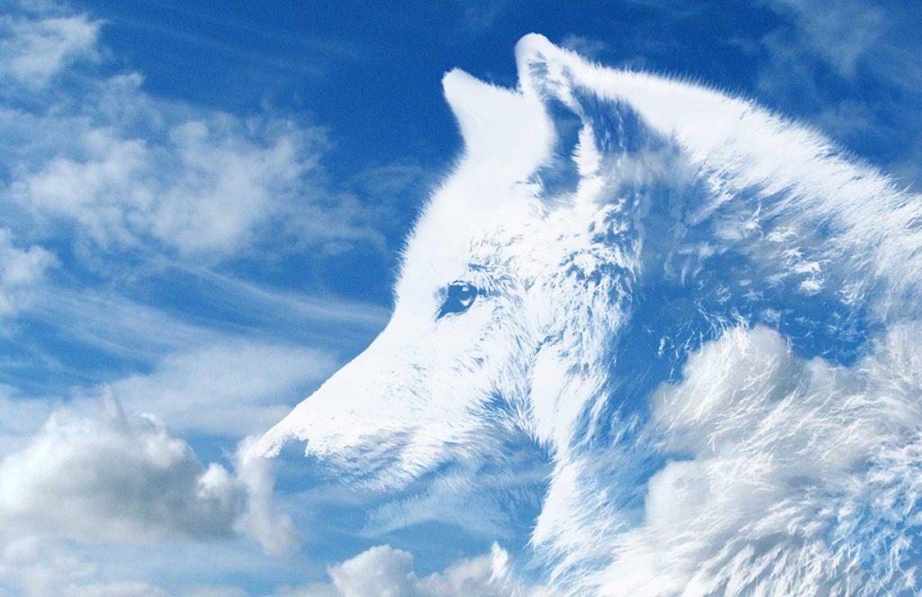 animal spirit guides, animal spirit guide