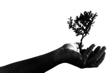 A man holding a tree